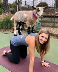 ikuti senam yoga aktris sophie kaitkan kambing