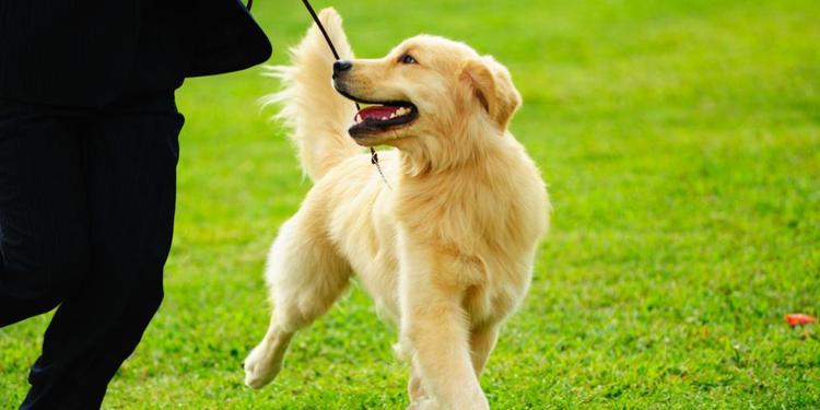 Kenali Terlebih Dahulu Pribadi Diri Anda,Jika ingin Pelihara Anjing